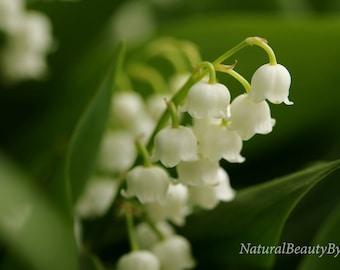 white coral bells, floral art print, macro flower photo, flower photography, garden wall art,spring flower,nature photography,fine art print