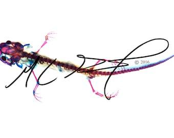 Diaphonized eastern tiger salamander, print