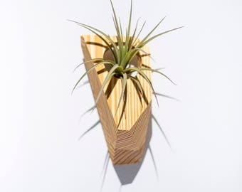 GEORGIA - Air Plant Holder