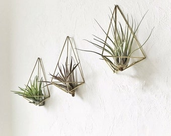 Himmeli wall plant hanger polyhedron No01 of set of 3 + air plant