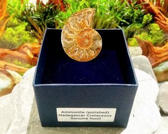 SilverGeo® Fossil Ammonite Gift [FS9507]