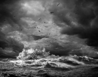 Stromy Seas, sea gulls, ocean, waves, sea scape, clouds, black and white, fine art,