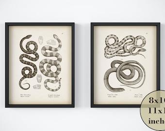 Set of 2 prints, Vintage print set, Reptile prints, Antique animal prints, Print set, Instant download printable set, 8x10 art, 11x14 art