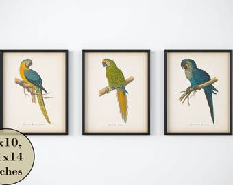 Vintage bird print set, Set of 3 parrot prints, Printable bird set, Digital download print, Antique wall art, Set of prints, Illustrations