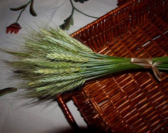 Decorative Wheat / Dried Wheat Bundles / Country Bouquet / Bridal Bouquet/ Dried Wheat Bouquet / Eco decor