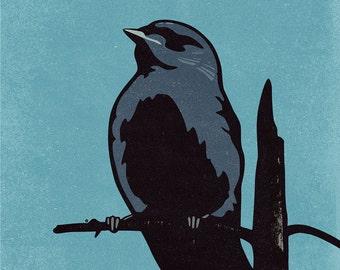 Canada Jay, Gray Jay, Whiskey Jack, Canada Jay Print, Canada Jay Poster, Canada Jay Art, Gray Jay Poster, Gray Jay Print, Canada Bird Art