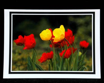 Tulips Reaching For The Morning Light 5x7 Blank Card By ThomasMinutoloPhotos