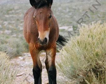 Foal Photo Card