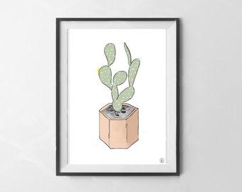map cactus - decoration