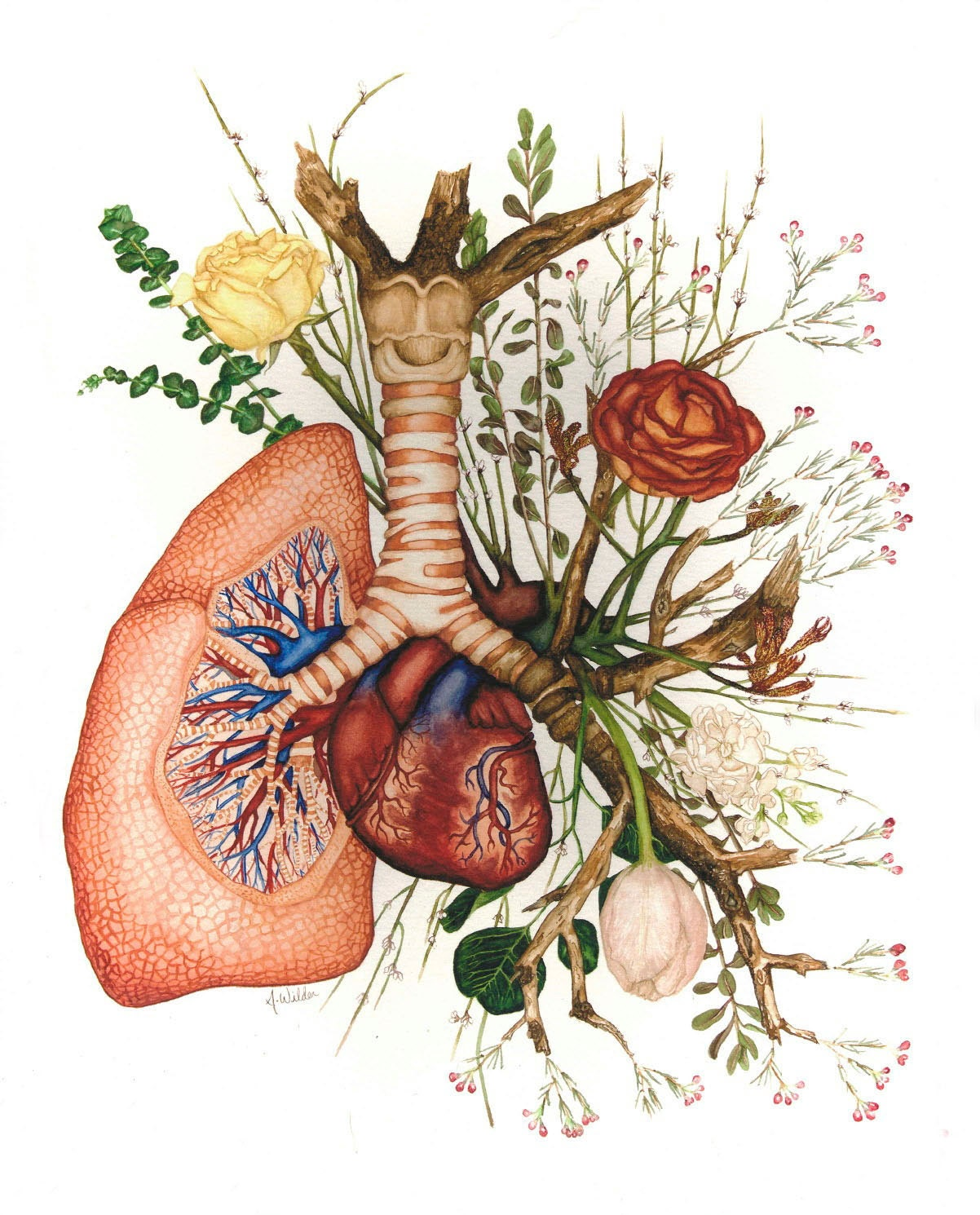 Giclee Print Branching Anatomical Watercolor