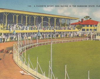 Vintage Florida Postcard - Dog Racing in the Sunshine State