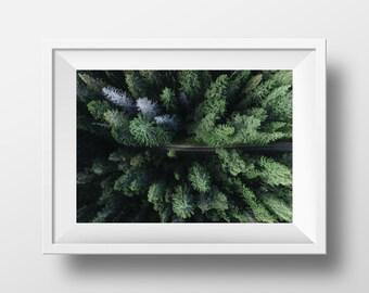 Forest Road Print, Nature Print, Nature Art, Nature Photography, Forest Art, Wall Art, Nature Photography, Art Print, Instant Download Art
