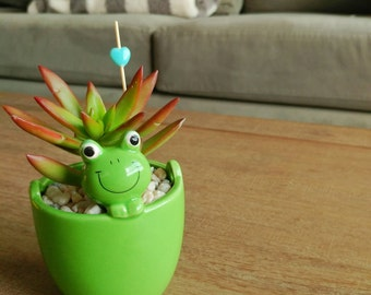 Green Frog planter ceramic planter - succulent planter mini planter succulent pot - home decor - office decor (FREE charm, pick, succulent)