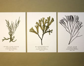 Seaweed Postcards: Set of 3