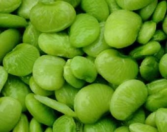 20 FORDHOOK LIMA BEAN Phaseolus Lunatus Bush Bean Vegetable Seeds