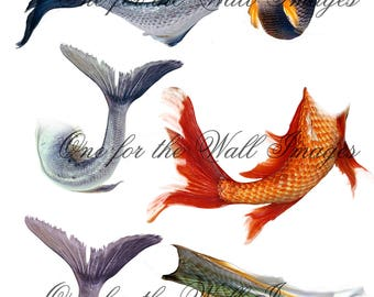 Mermaid Tails Png cutouts x 6
