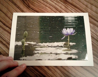 Water lily blue spring postcard