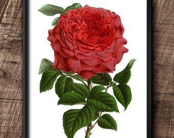 Red rose · Instant Download · Flowers · Vintage · Wall · Printable · Digital File #85