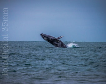 Download instant-photography of whale-high resolution 300 DPI-archive digital