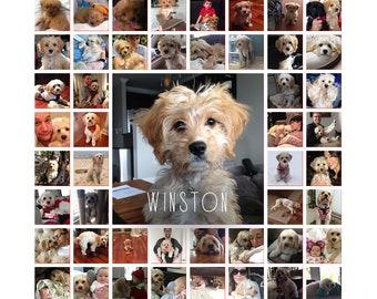 16x16 Pet Photo Collage Canvas