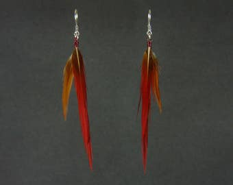 Earrings feather red tip of Chrisolophus pictus