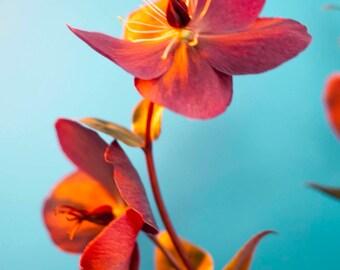 tiny flowers. #2