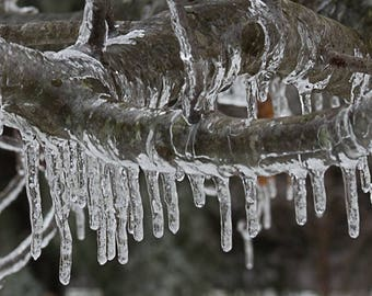 Icycle Branch