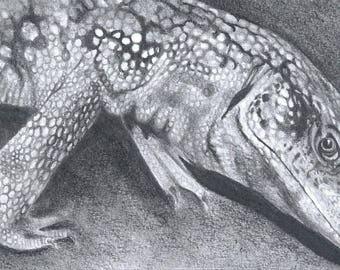 Petrie the Savvy Art Print