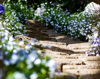 Stone Path Through Flowers Photo Print