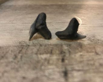 Shark tooth earrings