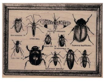 rubber stamp bug specimens insects   large background stamps no20060 scrapbooking supplies  science illustration