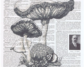 Mushrooms,Funghi,Antique.French.Book Page Print.Pretty picture.Twenties.Vintage.Home Deco.Birthday Gift.art.boho.black and white.nature