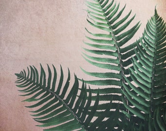 Botanical photography print tropical dark green fern plant leaves large wall art - Fern Trio