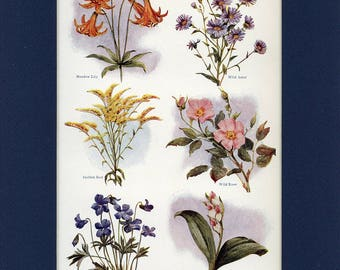 Natural History 1911 Antique Print of Country Flowers