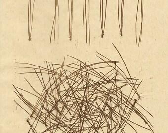 Pine Needles linoleum relief print