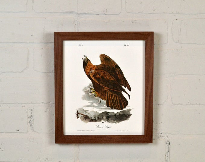"Framed Audubon Bird Print ""Golden Eagle"" Full Color Reproduction - Solid Natural Walnut Peewee Style - IN STOCK - Same Day Shipping"