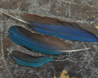 Real Beautiful Macaw Feathers Naturally Molted