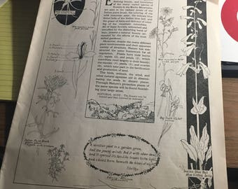 Rocky Mountains Wild Flowers 1924 lesson plan