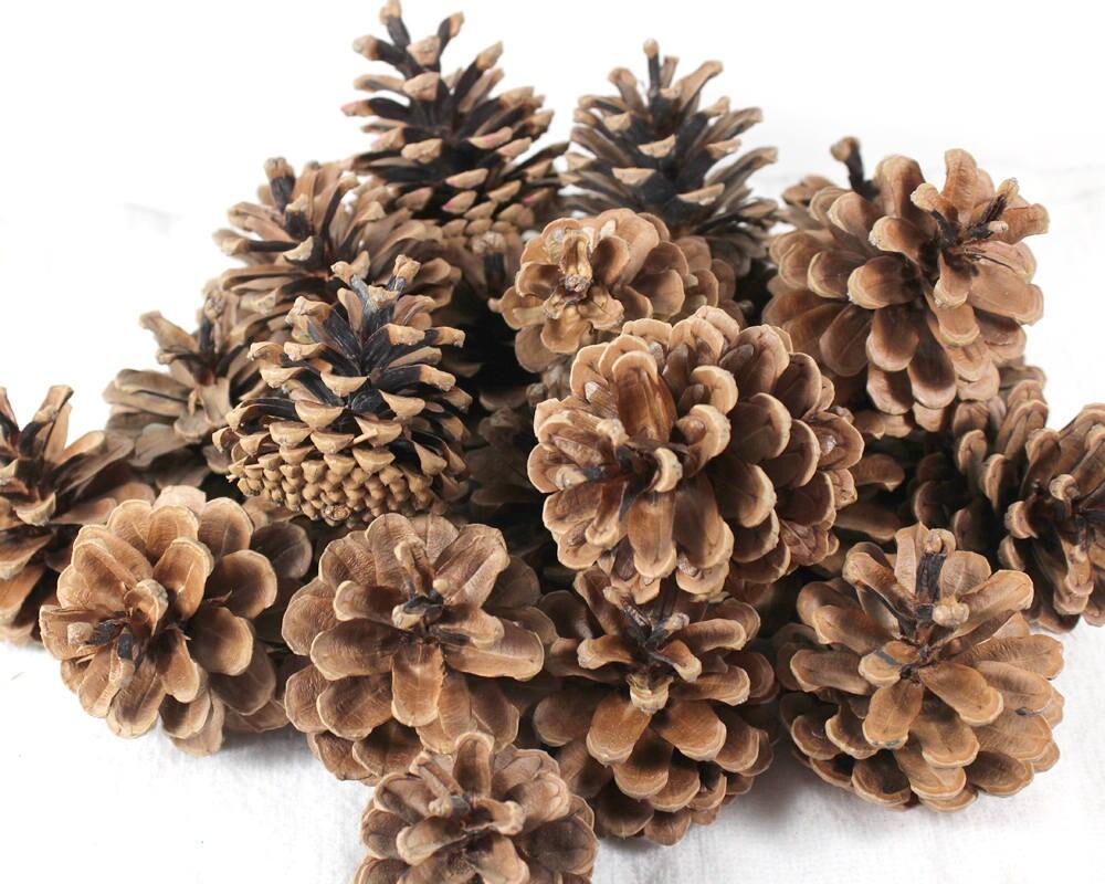 Natural pine cones seasonal pinecones home decor door for Rustic home decor suppliers