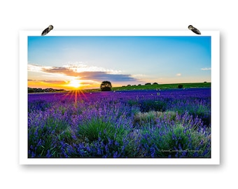 Lavender Field, Fine Art Photography, Landscape Photos, England Photography, Lavender Prints, Sunset Photography, Purple Flowers, Wall Art