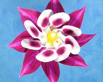 Magenta Columbine Flower Double Spin Pinwheel Whirligig Spinner Windmill Fan