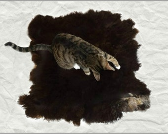 Cruelty Free, Navajo Churro, Lambs Wool Rug, Wool Cat Bed, Felted Fleece, Sheep Friendly Wool, Humane Sheepskin, Rustic Pet Rug,  Dog Mat