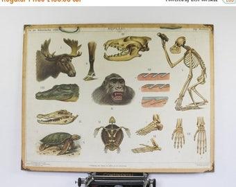 SALE Vintage School Chart, Animals in Borneo