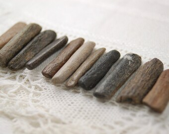 "11 fossil bone sticks from prehistoric marine animals (1"" - 1.25"")  (no.21)"
