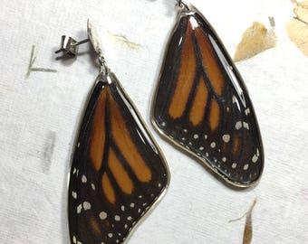 Real Monarch Butterfly Wing Earrings in Sterling Silver Handmade Posts