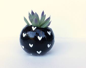 Air Plant Planter with Air Plant - Black with White Hearts.