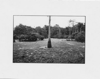 the Palm minimalist landscape fine art photo vintage photography large Fine Art original mid century modern Bob Egar