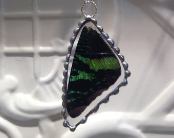 Real Butterfly Wing Pendant  - Madagascan Sunset Moth - Great Christmas Gift or Birthday Present