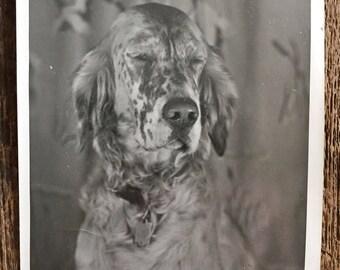 Original Vintage Photograph Mr Sniffles