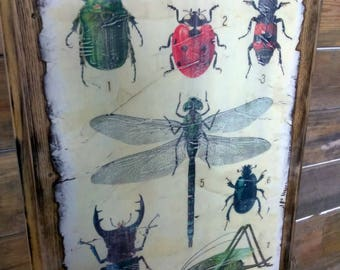 Reclaimed Wood Bug Insect Wall Art